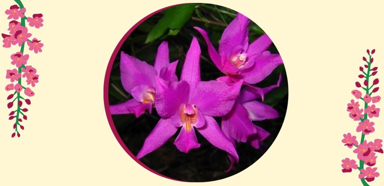 Tipos de orquídeas más populares que tienes que conocer - sabrina-29-2
