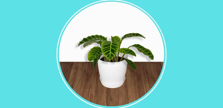 5 plantas pet friendly que debes tener en casa para cuidar de tus mascotas - sabrina-86