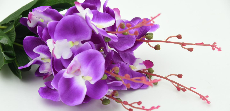 Expo de Orquídeas en el Franz Mayer ¡Todo lo que necesitas saber!