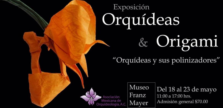 Expo de Orquídeas en el Franz Mayer ¡Todo lo que necesitas saber! - sabrina-17-1