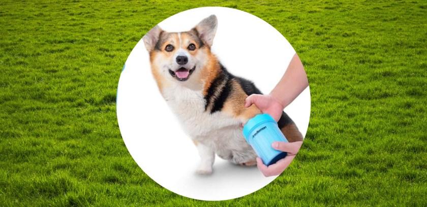 5 formas de limpiar las patitas de tu perro después de un paseo - sabrina-3-1