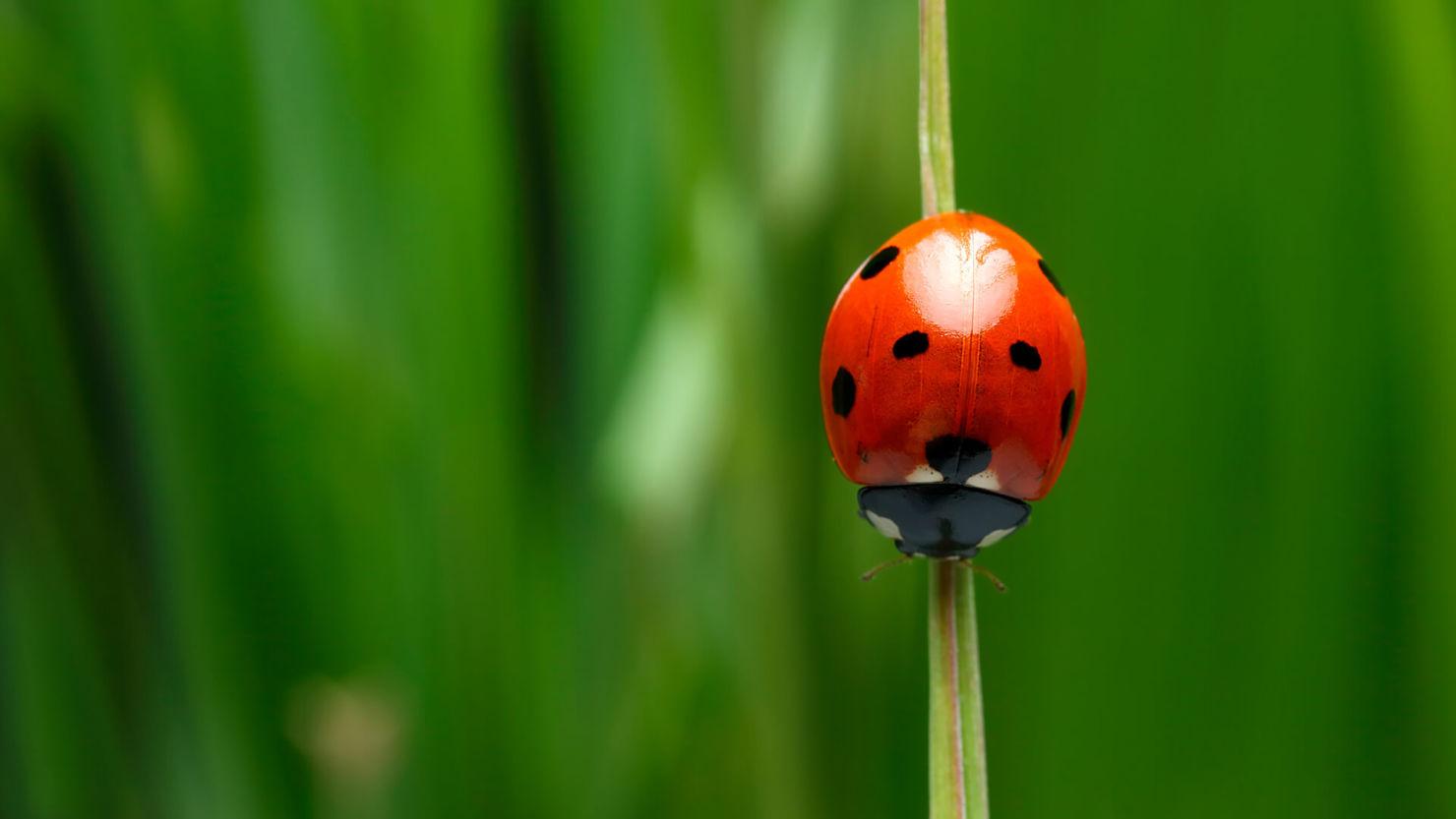 Llévalos en tu corazón: estos animales te traerán buena suerte