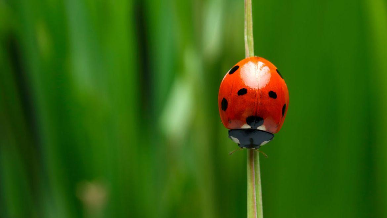 Llévalos en tu corazón: estos animales te traerán buena suerte - catarina