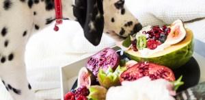 Premios saludables para tus mascotas que les van a encantar