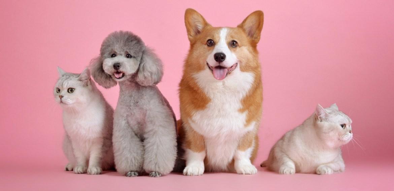 Aprende a diferenciar entre los vómitos de tus mascotas - sabrina-2021-07-28t214430730