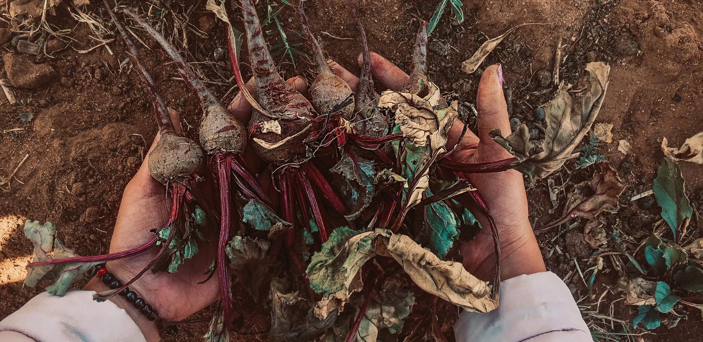 Beneficios de compostar  ¡A marcar la diferencia!