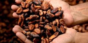 Conoce la ruta del cacao  ¡A descubrir nuestro país!