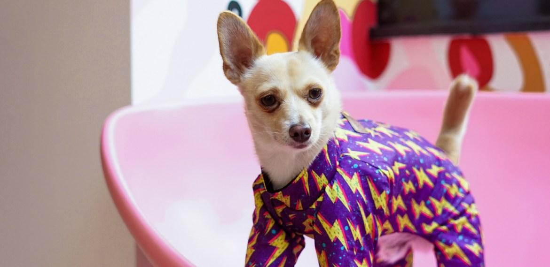 Tips para lavar la ropa de tus mascotas de manera correcta - sabrina-2021-08-08t001634172