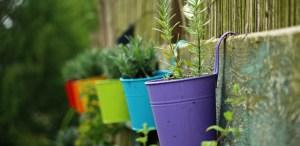 5 consejos para elegir la maceta ideal para tus cultivos en casa