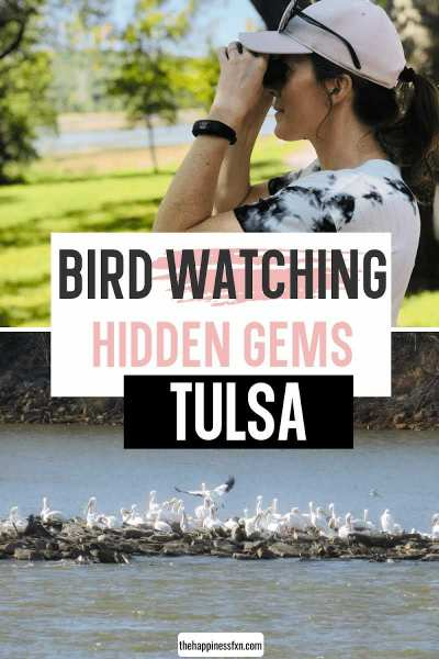 girl bird watching through binoculars and pod of american white pelicans along arkansas river in tulsa