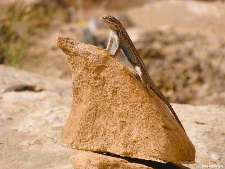 lizzard-sun-rock-cairn