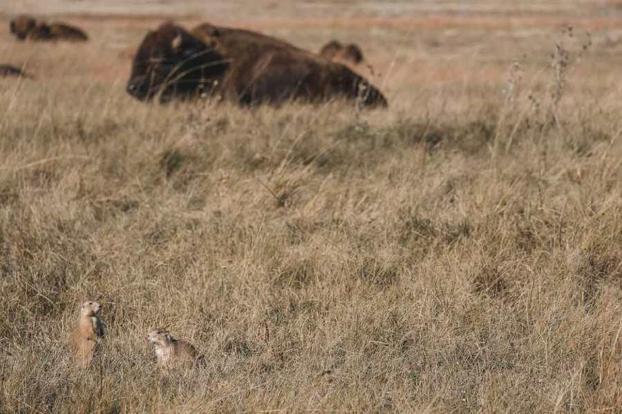 wind-cave-national-park-south-dakota