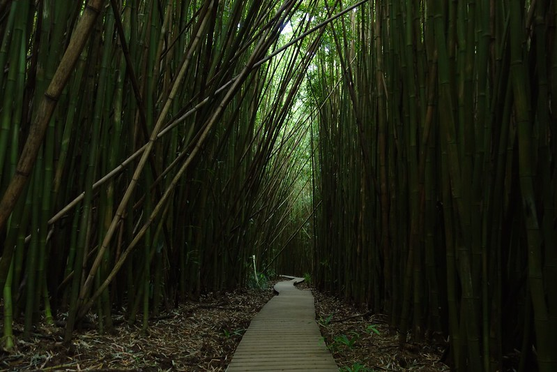 9 Unforgettable Bamboo Forests and Gardens in the USA