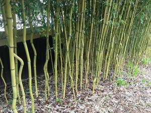 Benefits of Bamboo Mulch