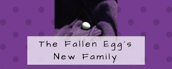 The Fallen Egg's New Family