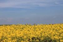 Fields of Gold East Cork