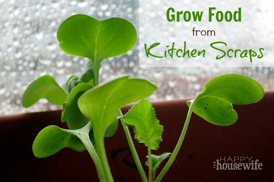 Grow Food from Kitchen Scraps | The Happy Housewife