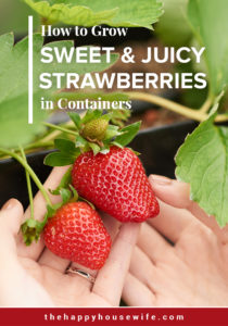 How to Grow Sweet & Juicy Strawberries in Containers