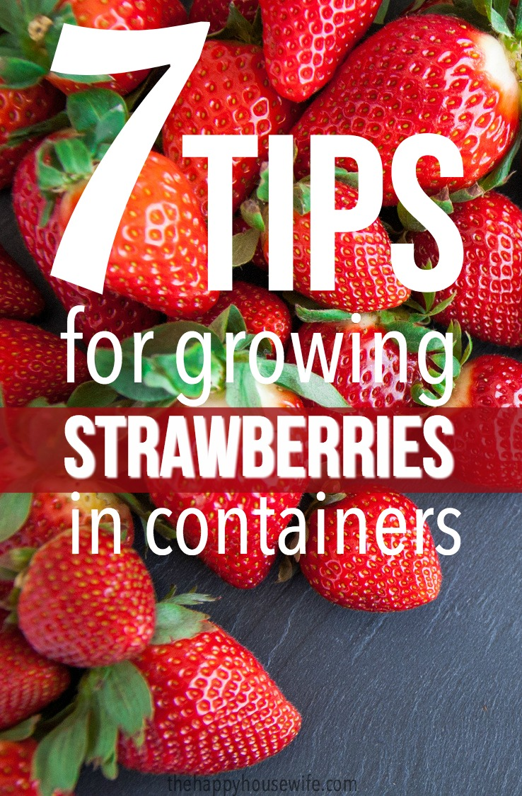 Tips for growing strawberries in containers
