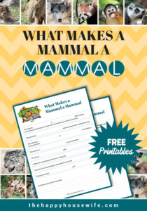 Mammals characteristics for kids