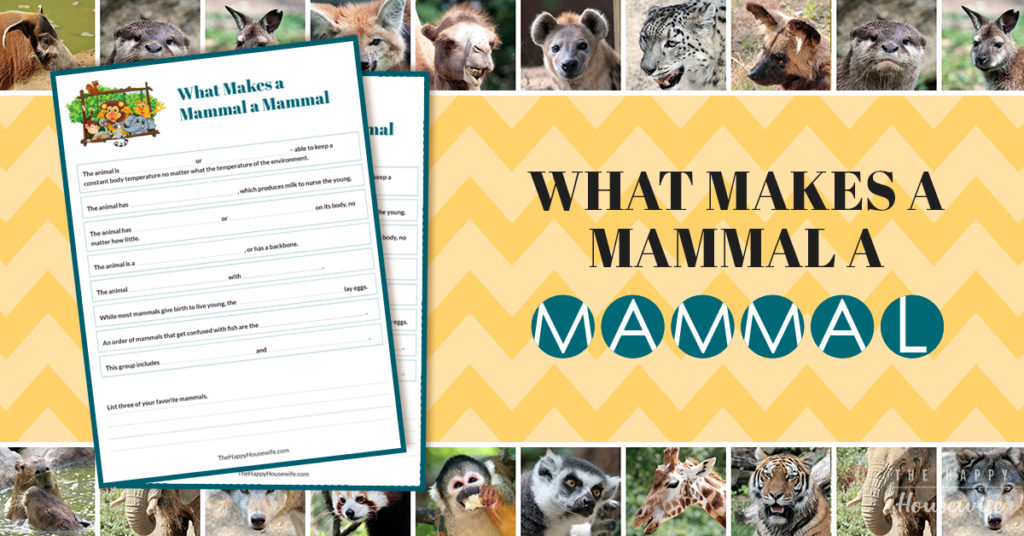 What makes a mammal a mammal