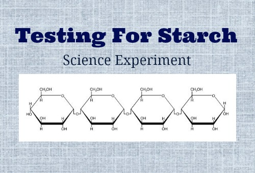 Testing for Starch Science Experiment | The Happy Housewife
