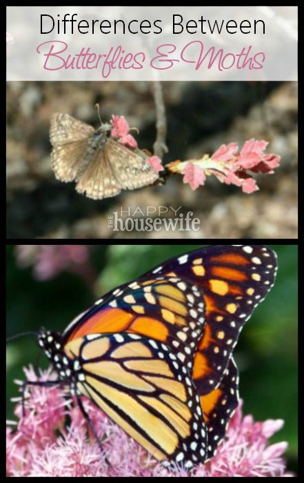 Differences Between Butterflies and Moths | The Happy Housewife