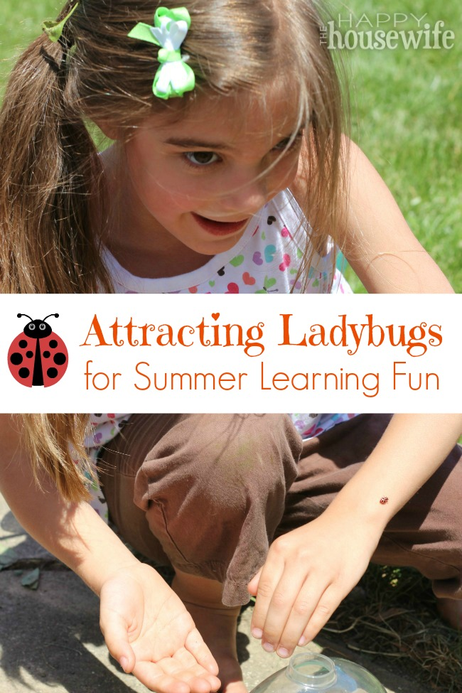 Attracting Ladybugs for Summer Learning Fun at The Happy Housewife
