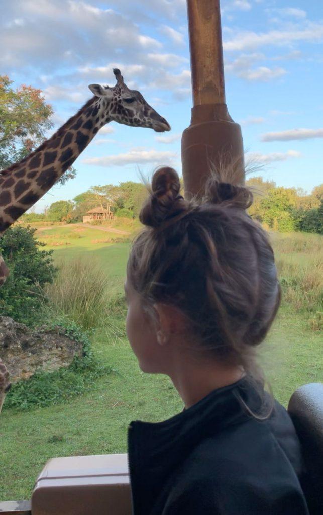 Animal Kingdom sunset Safari