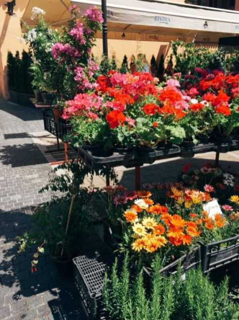flowers at the dolac market in zagreb croatia