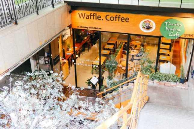 Thanks Nature Café, Seoul, Korea Café mit Schafen
