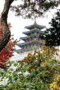 Herbst im Garten, Gyeongbokgung Palast, Seoul, Korea