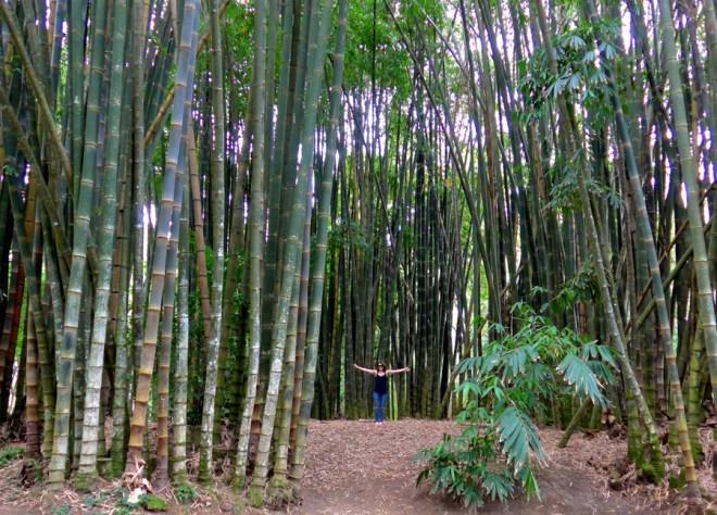 Botanical Garden Rio de Janeiro - Jardim Botanico do RIo de Janeiro - Tall bamboo