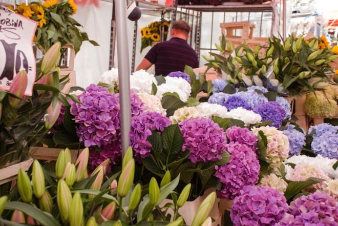 Columbia Road Flower Market Hydrangea