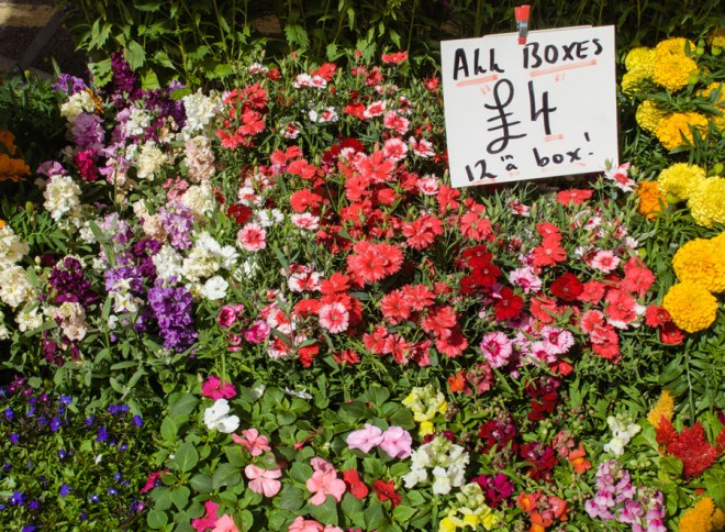 Columbia Road Flower Market Stalls