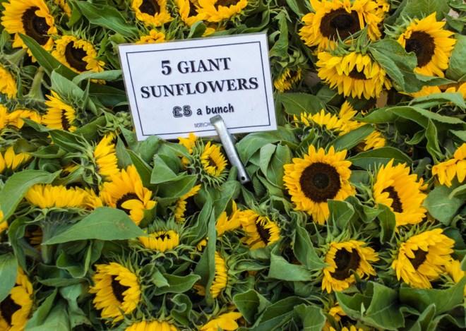 Columbia Road Flower Market sunflowers
