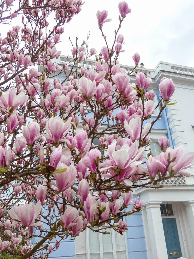 Landsdowne-Road-Notting-Hill-Blossom-London