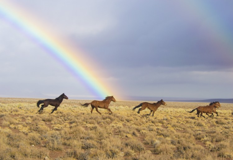 obligitory horse and rainbow picture
