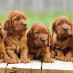 Puppy Training Stages Ages And Stages In Your Pup S Development