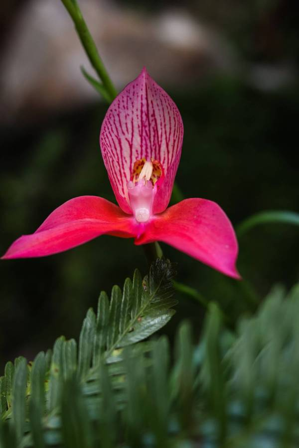 Red Disa Hike