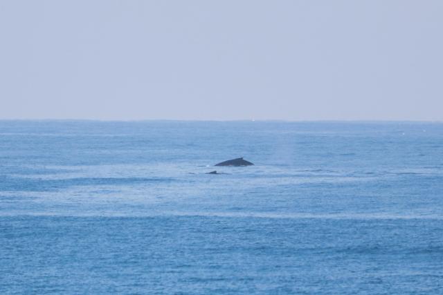 Whales at Mdumbi