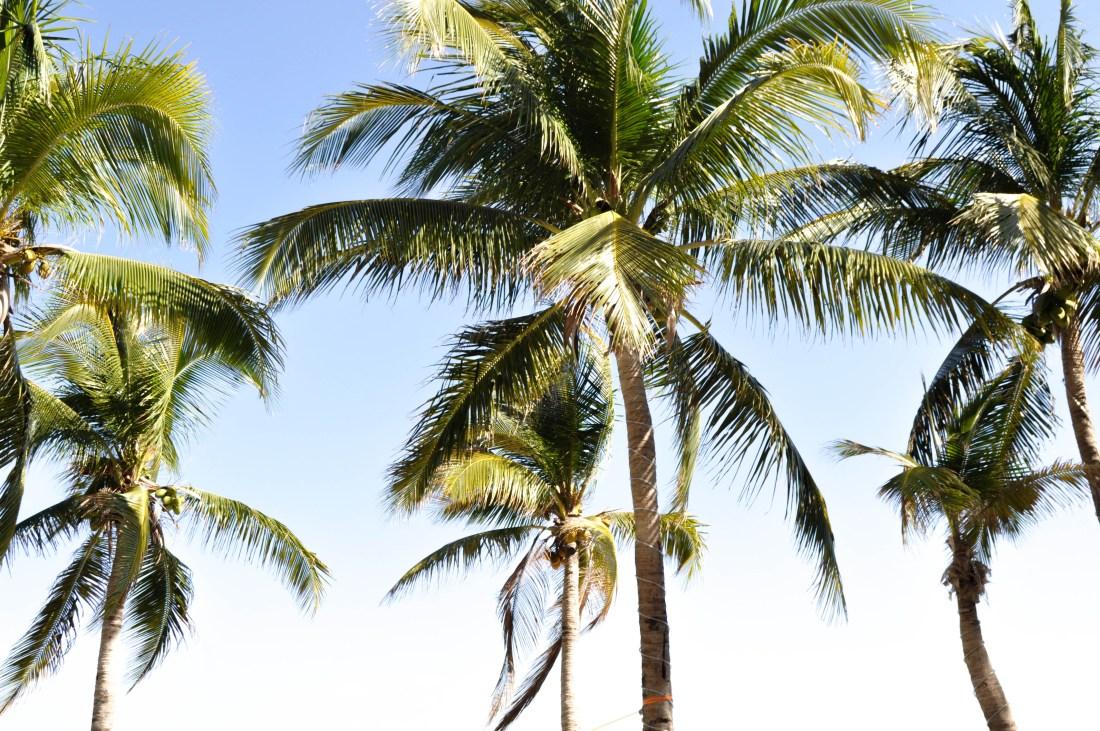 PALM-TREES-MEXICO-PLAYA-DEL-CARMEN-HAUTEMOMMIE-TRAVEL-BLOGGER