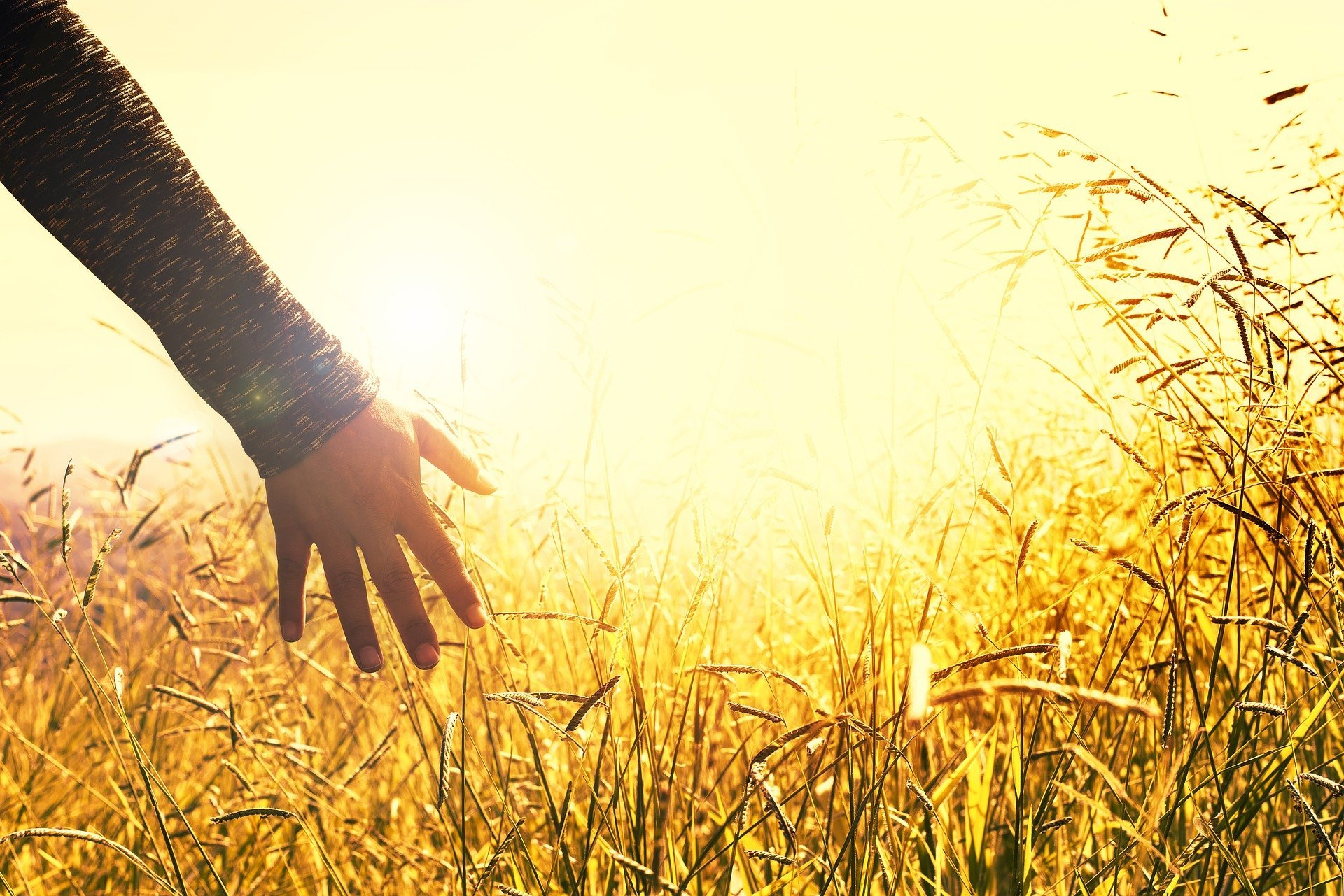 woman's hand touching tall grass in a sunny meadow
