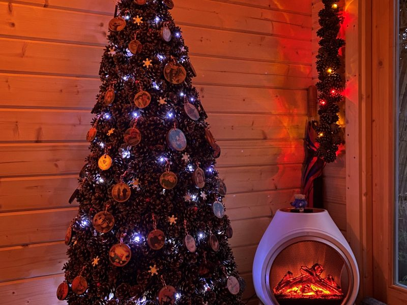 the fir cone tree