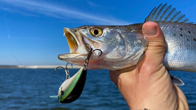 MARSH MAN MASSON: Speckled Trout CRUSHING Hard-Plastic Baits!