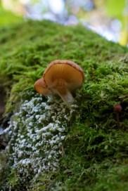 Fungus (18)