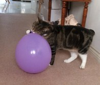 Purdey and balloon (3)