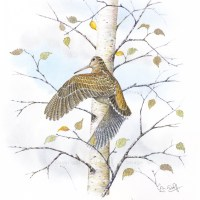 Woodcock pin-feather paintings - with gold leaf