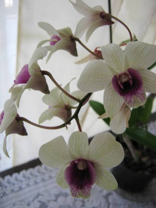 orchid houseplant image