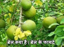 बेल क्या है | बेल के फायदे | Bell Ke Fayde Aur Upyog In Hindi